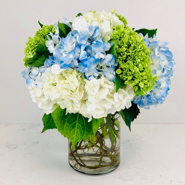 Love for Hydrangea