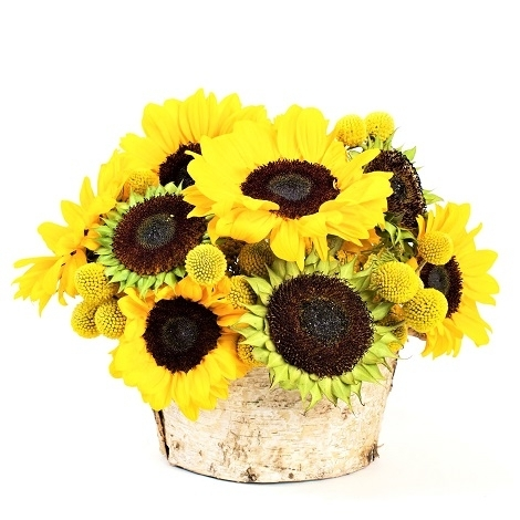 Sunflower Birch Bowl